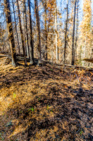 The burned forest along the Watchtower Trail.