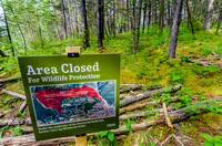 A good portion of the slopes above the Silvertip Golf Course are restricted to particular marked trails only.